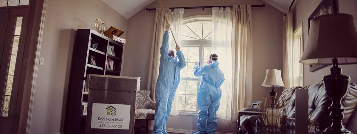 Mold Removal - Black Mold Removal Springfield Missouri