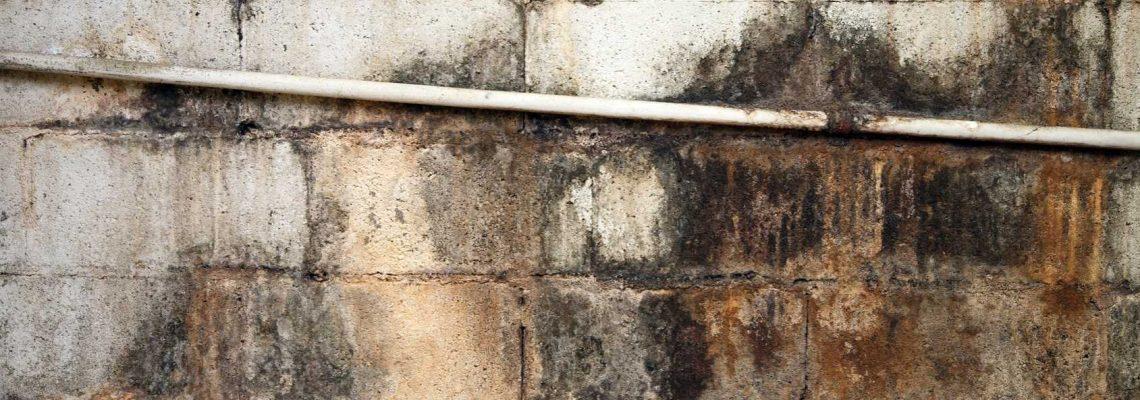 Do I need a Dehumidifier? - Mold Remediator in Springfield Missouri