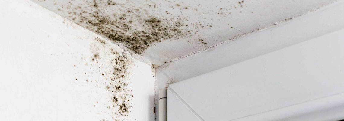 EPA Guidelines for Mold - Mold Remediation Company in Springfield MO