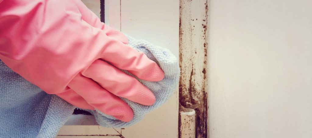 Easy Ways To Combat Minor Amounts of Mold In Your House in Springfield Missouri