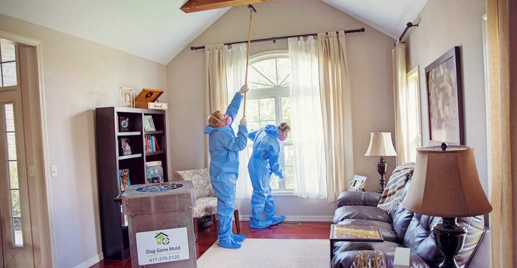 What Does Mold Remediation Cost in Springfield Missouri