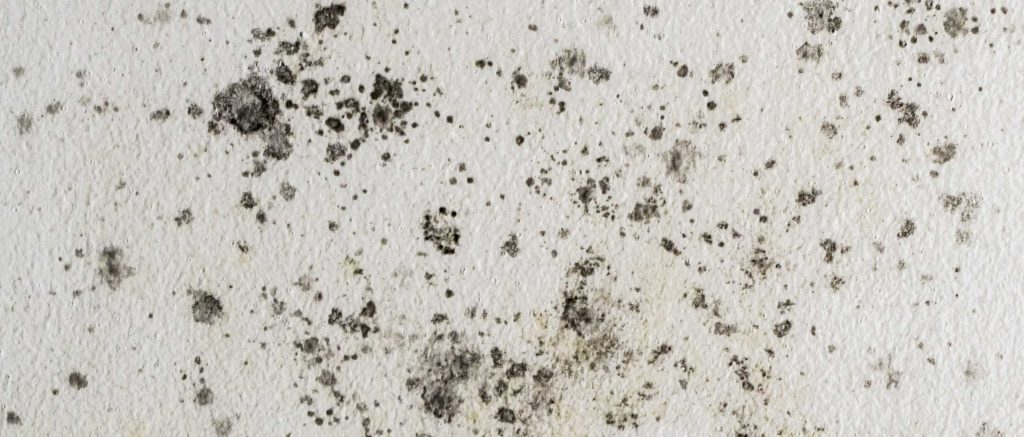 What You Should See After Mold Remediation in Springfield Missouri