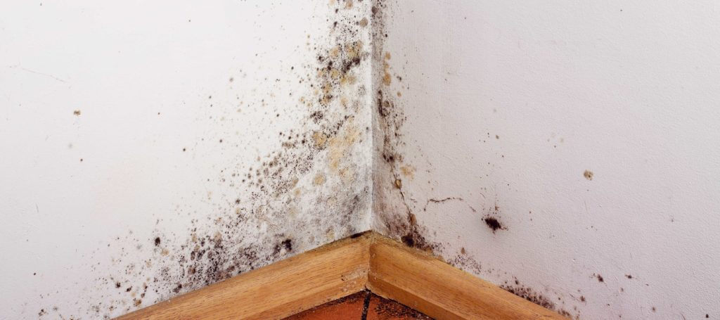 Drywall Is Prime Breeding Ground For Mold Infestation in Springfield Missouri